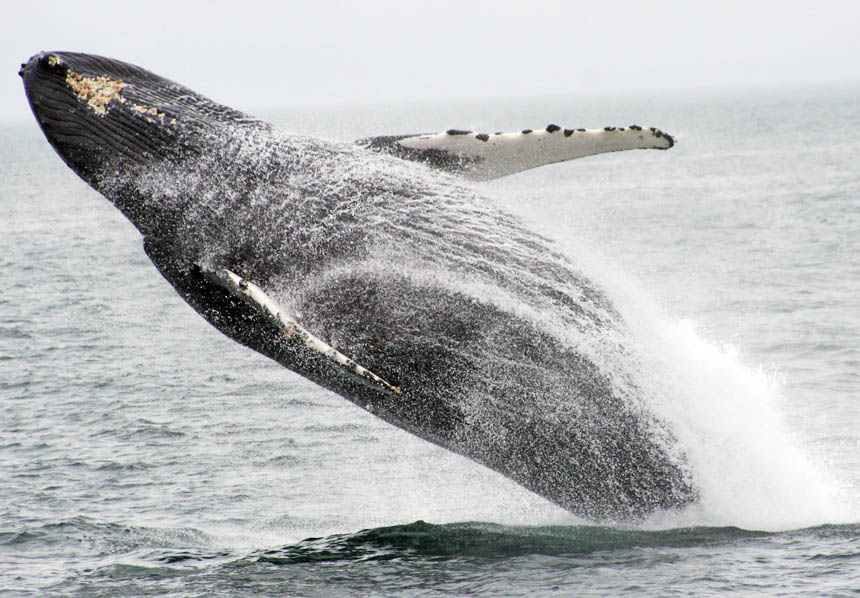 reflections_whale.jpg