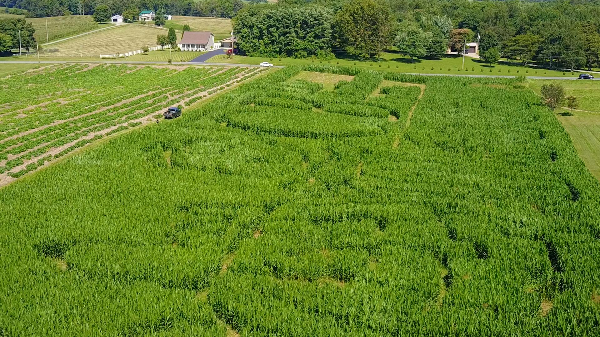 TCB Corn Maze.00_00_22_03.Still007.png