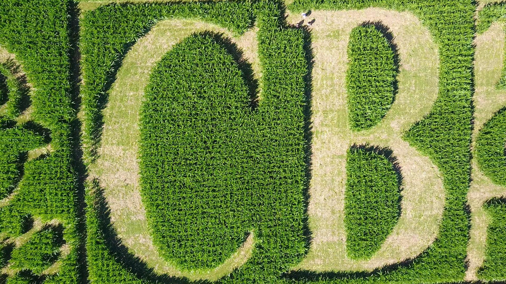TCB Corn Maze.00_03_14_19.Still003.png