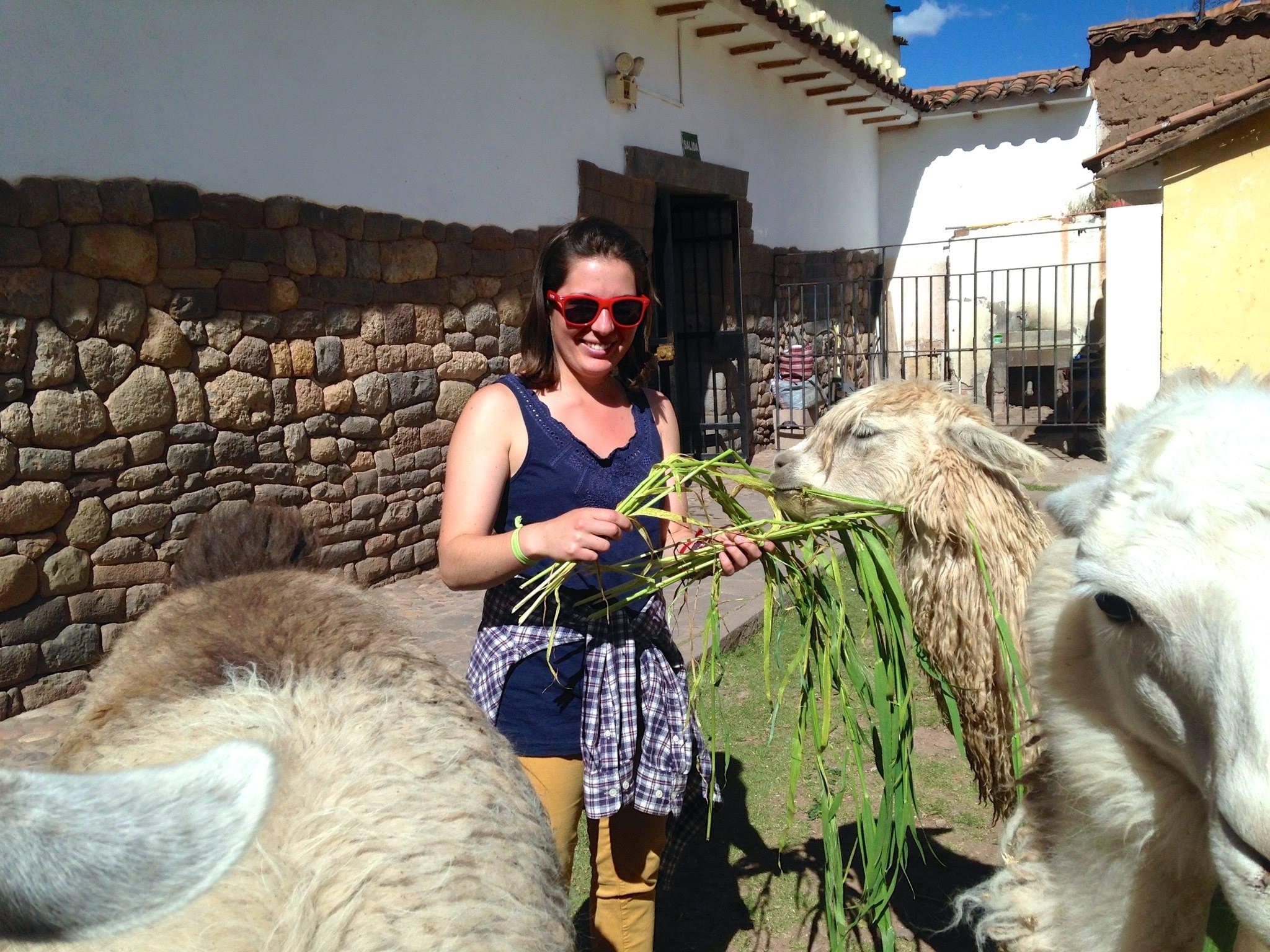 Feeding alpacas in Cusco, Peru