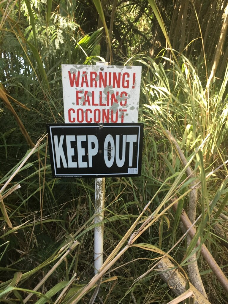 Not so fun fact: About 150 people die from falling coconuts every year