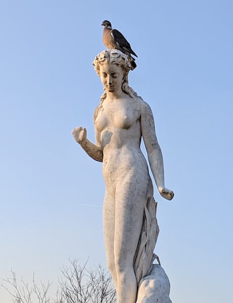 Pigeon on a Nymphe statue in the Tuileries Garden