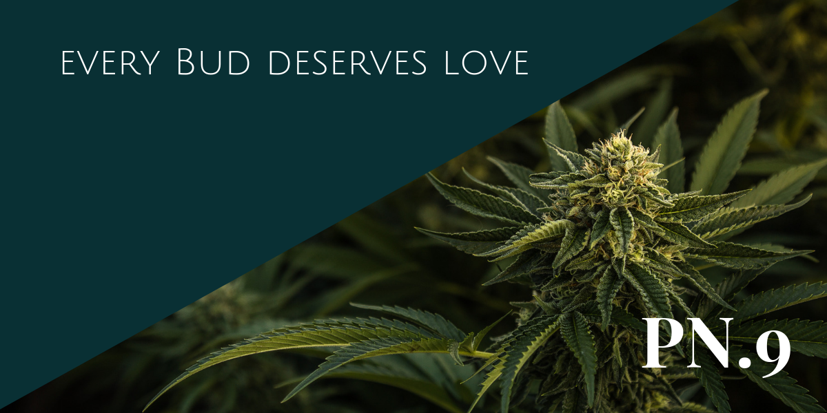Bud love.png