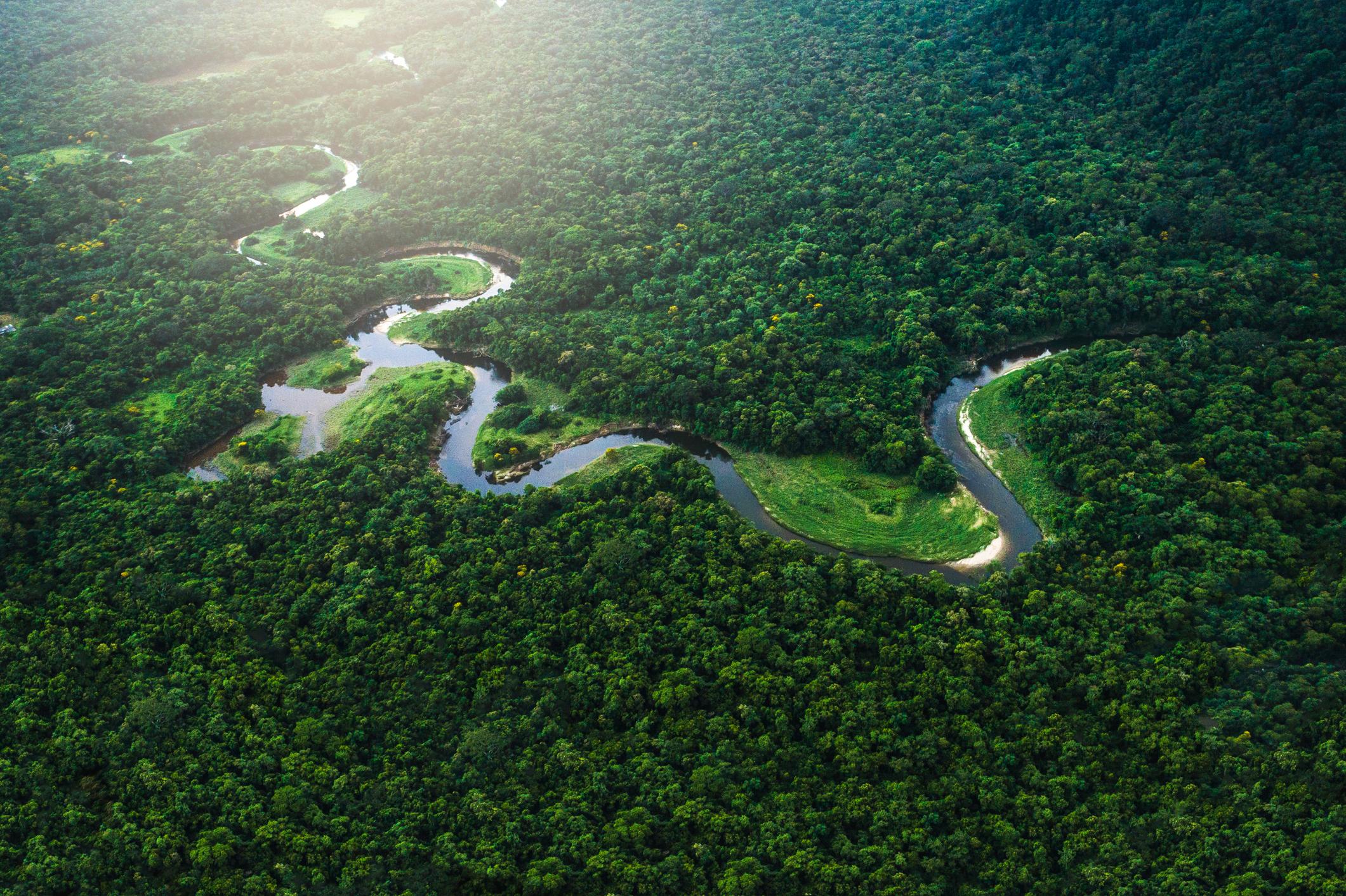 The Mata Atlântica rainforest