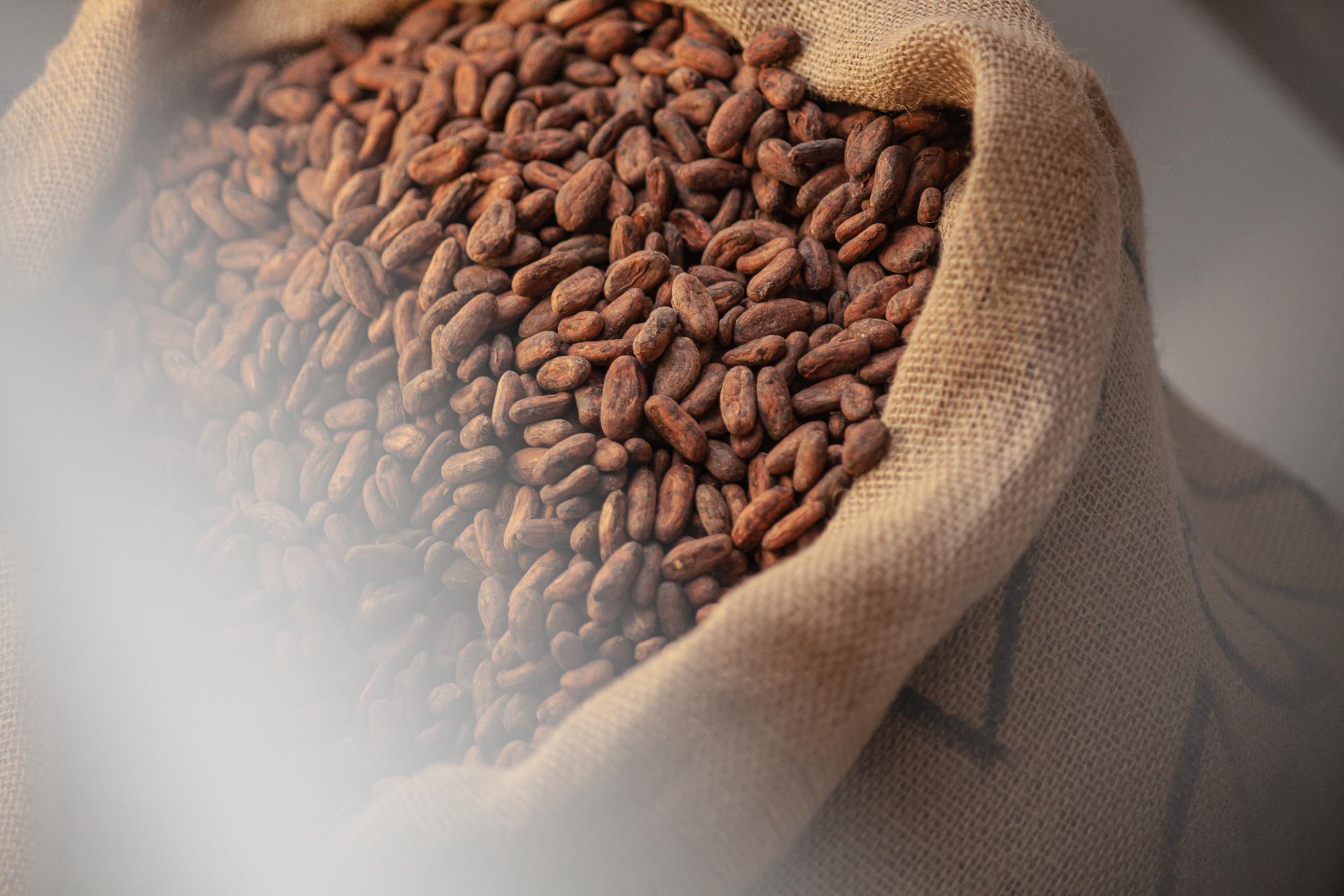 Cacao_Beans_036.jpg