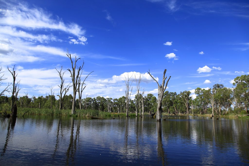 wetlander cruises - Relaxed cruising on the Gunbower Creek, a remarkable environment of diverse water birds, wildlife and aquatic plants. Enjoy a peaceful dining experience with Breakfast, Lunch or DinnerP: 0438 537 104A: Southern Rd Gannawarra Vic 3580Book Now