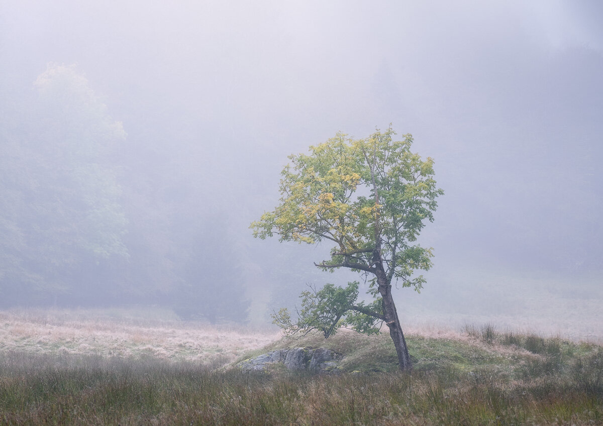 Tree-final-web-friday-1200.jpg