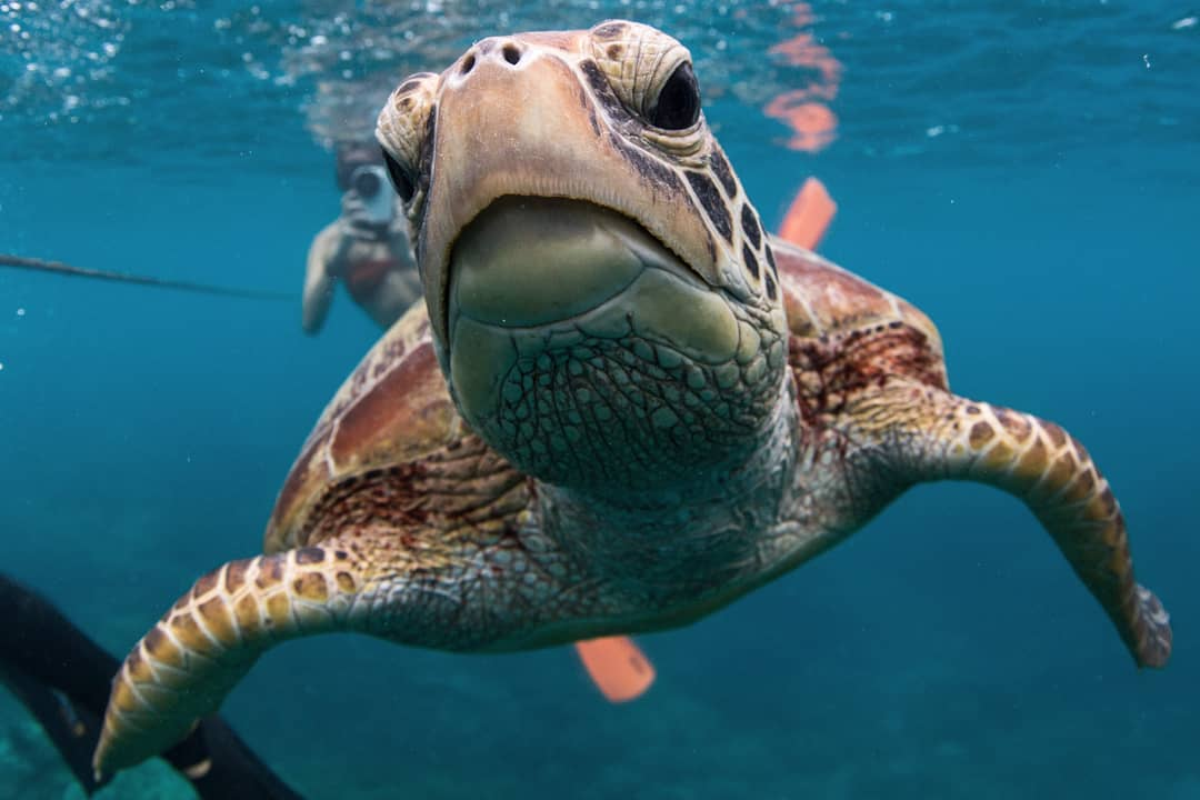 Scott Ruzzene Ocean Photographer - Interview with The Creative Series