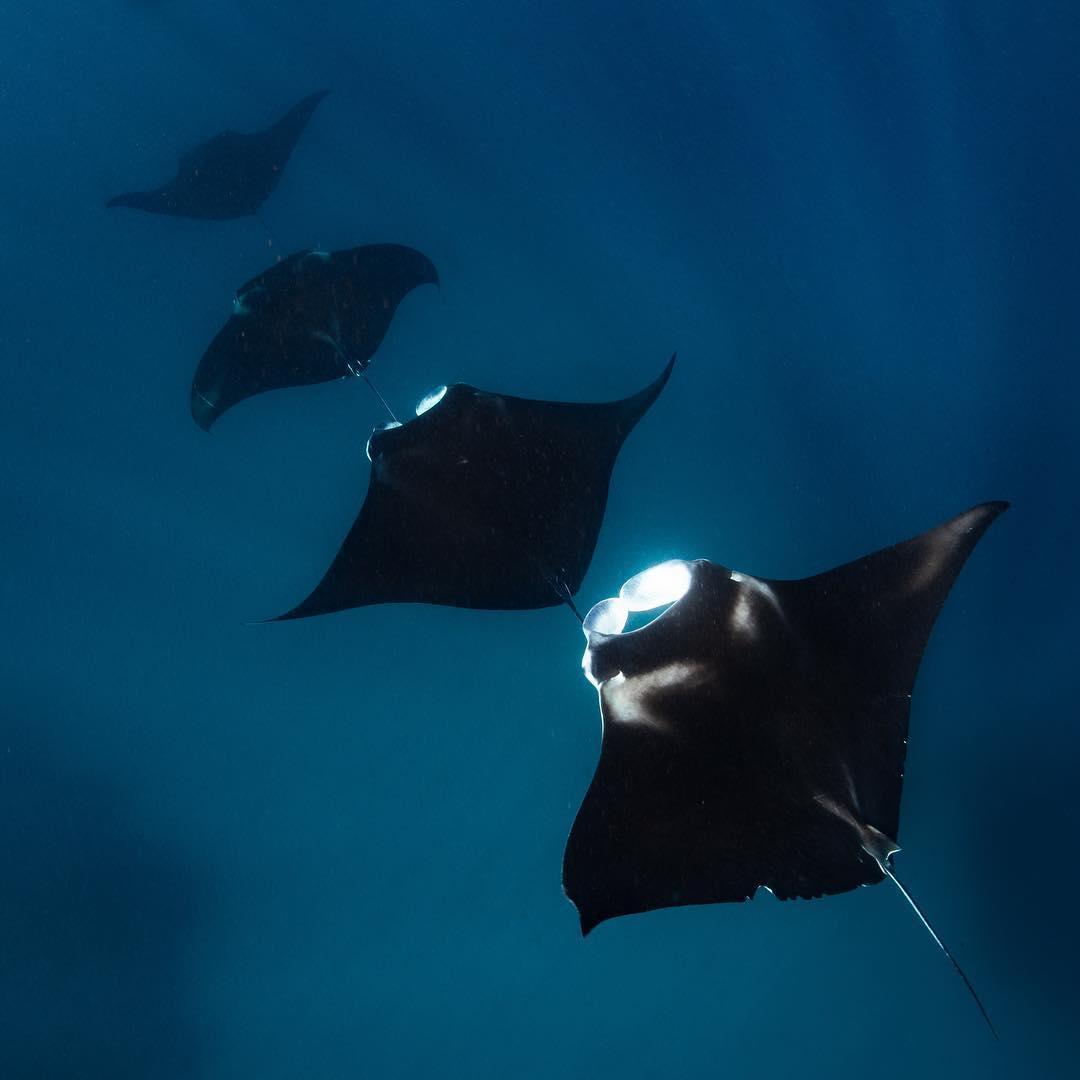 Jess Hadden Ningaloo Reef Ocean Photographer