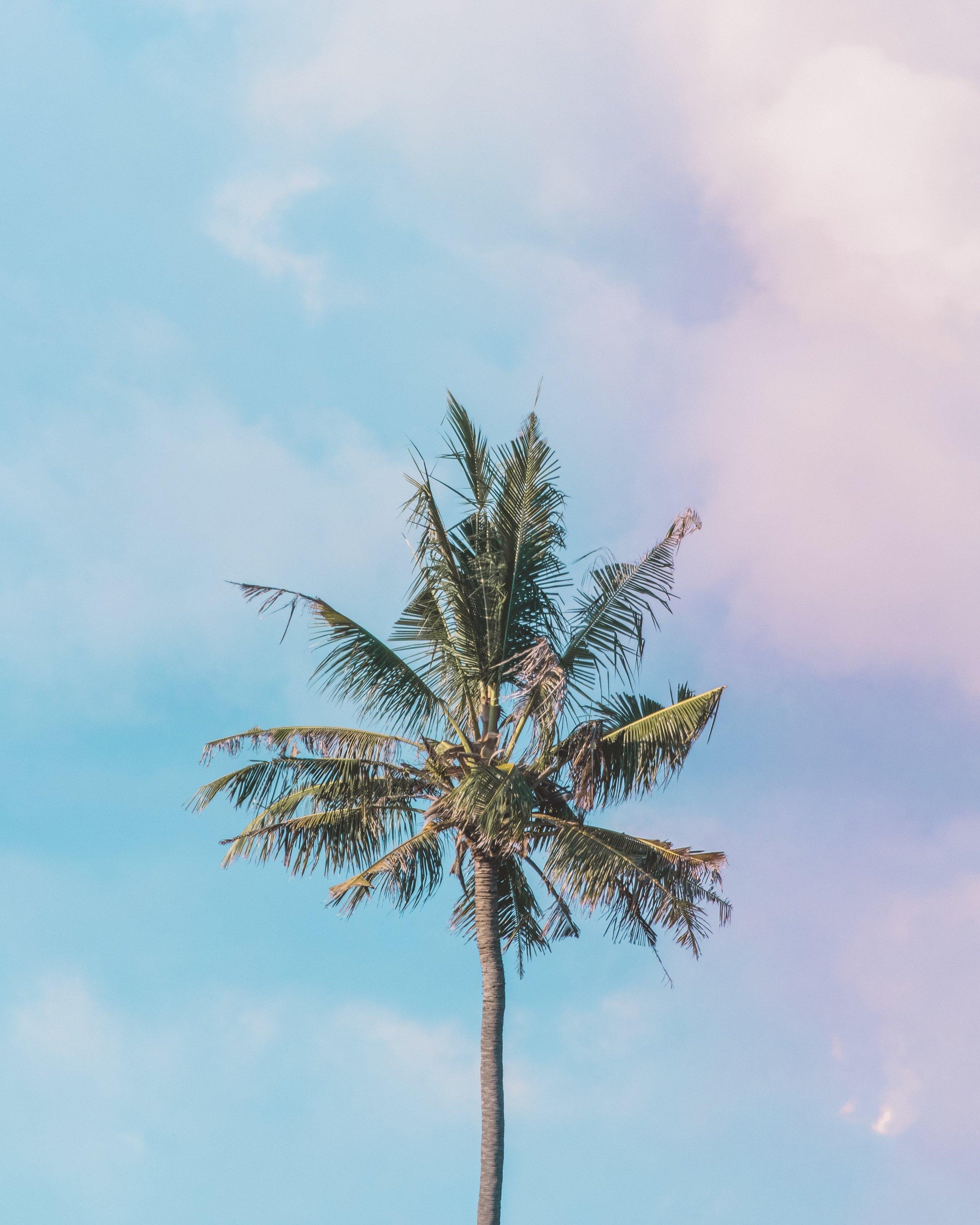 Palmtree-0200.JPG