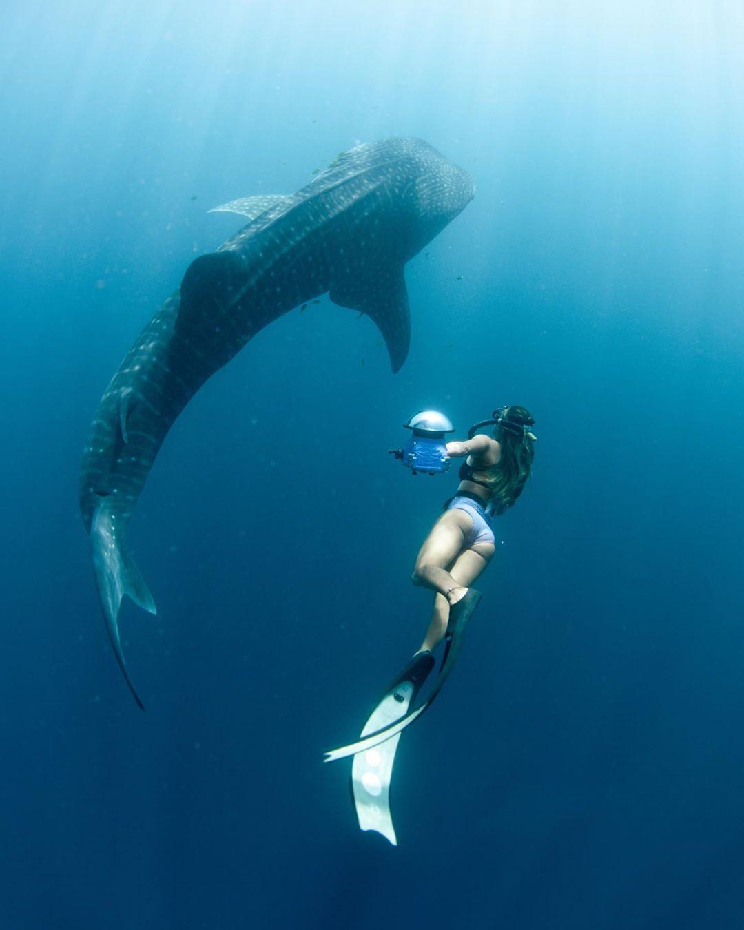 @oceanaimee - Ningaloo Reef