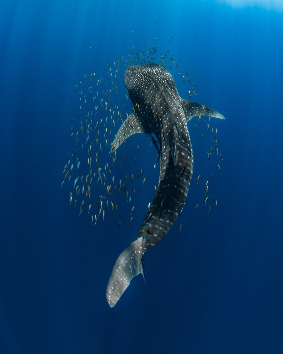 Interview With Jess Hadden Ningaloo Reef Ocean Photographer