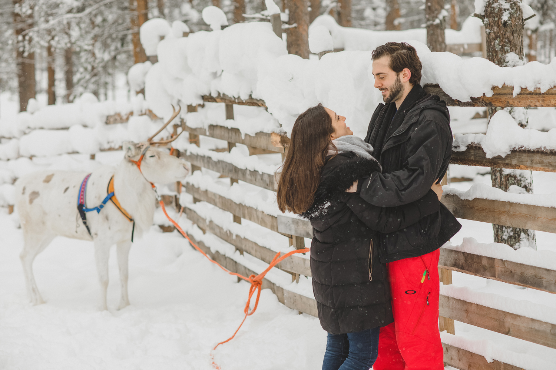 reindeer-lapland-photographer.jpg