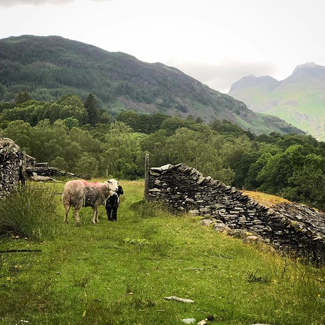 A weekend in the Langdales at Megs Beck Cottage where we spent many a rainy but happy half term as children. It was wonderful to go back after so many years and ramble over the fells. Megs Beck is due a face-lift and I am incredibly excited to help with the interior design of a house so important to my family. 🐑 🐑