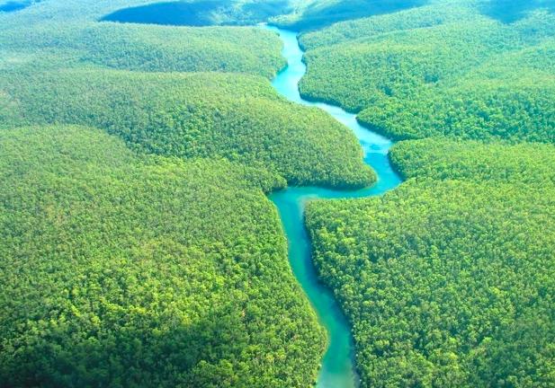 Amazon-rainforest.png