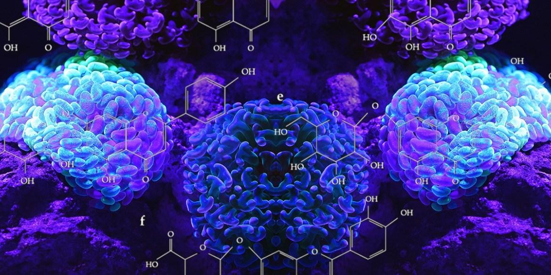 dmt_found_human_brain_molecule.jpg