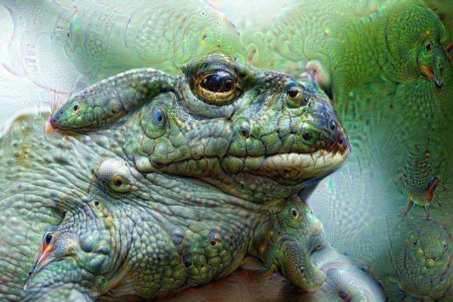 bufo-alvarius-toad.jpg