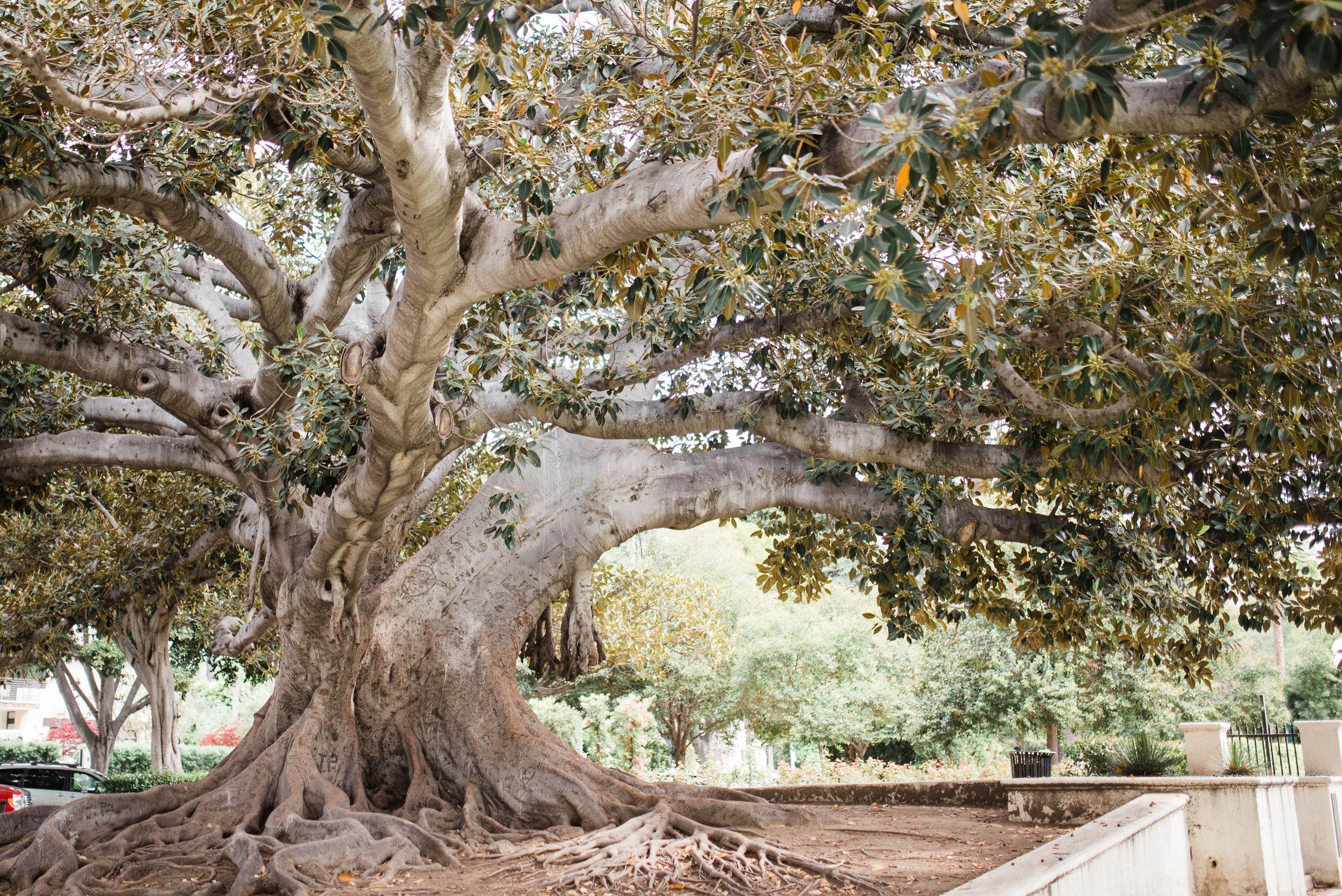 cool tree.jpg