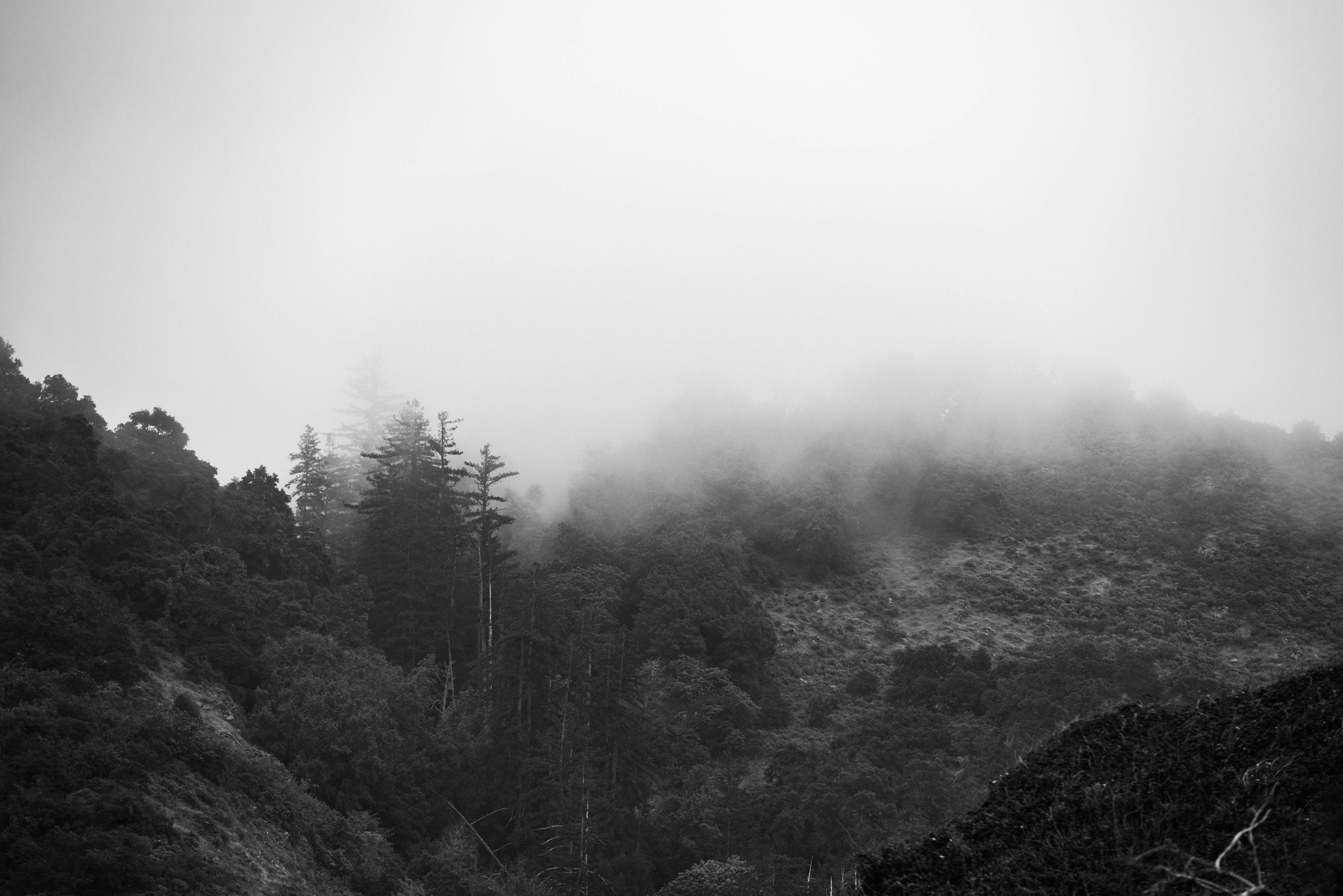 evening fog.jpg