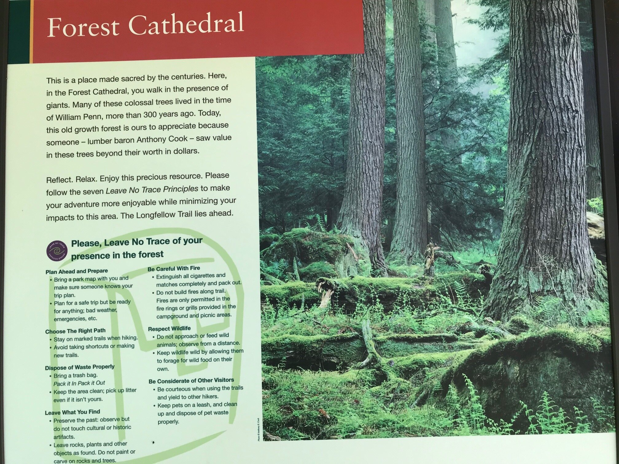 Facts about the forest.