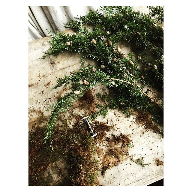 My Handsome Hemlock . . . . #hemlock #foraged #wreath #homemade #moss #merrychristmas #hohoho