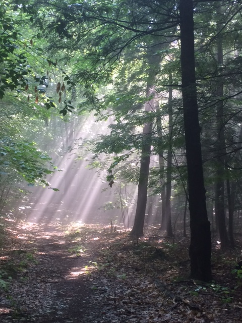 Morning sun rays. (Photo by Martha Waldman)