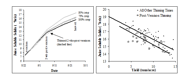 Figure 6A and B. Juice soluble solids accumulation from veraison to harvest on vines with different crop levels prior to veraison and on vines thinned 2 weeks post-veraison (A). The effect of yield on final harvest juice soluble solids of vines thinned at various times pre-veraison and 2 weeks post-veraison.