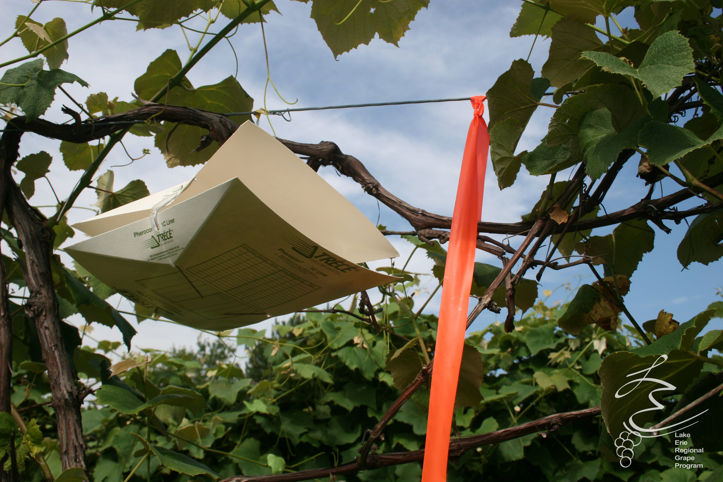 wing trap (2)-2.jpg
