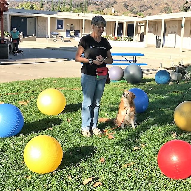 Intro to Treibball Class starts Tuesday, Feb 26. Space still available. Call today to register to join in on the fun!🐾🧠🐑🐕#kellysk9college #treibball #dogtraining