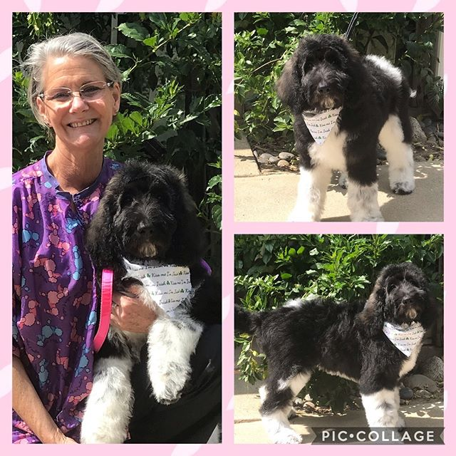 Emmy's First Groom. #kellysk9college #puppysfirstgroom #doggrooming