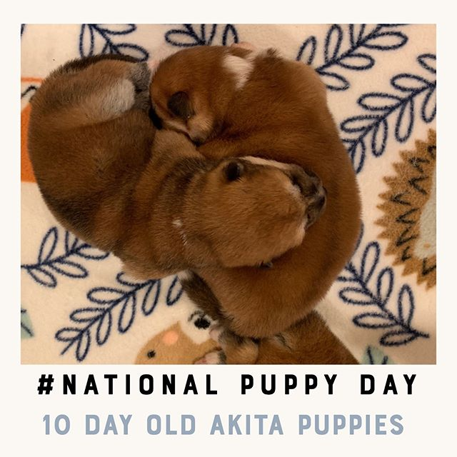 Happy National Puppy Day!! Share some of you best puppy pictures. #kellysk9college #nationalpuppyday #puppyday