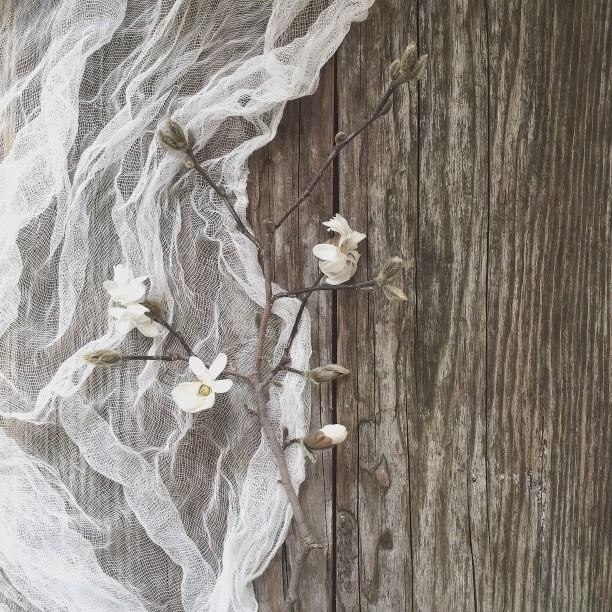 magnolia-on-rustic-wood_t20_e8w9N7.jpg
