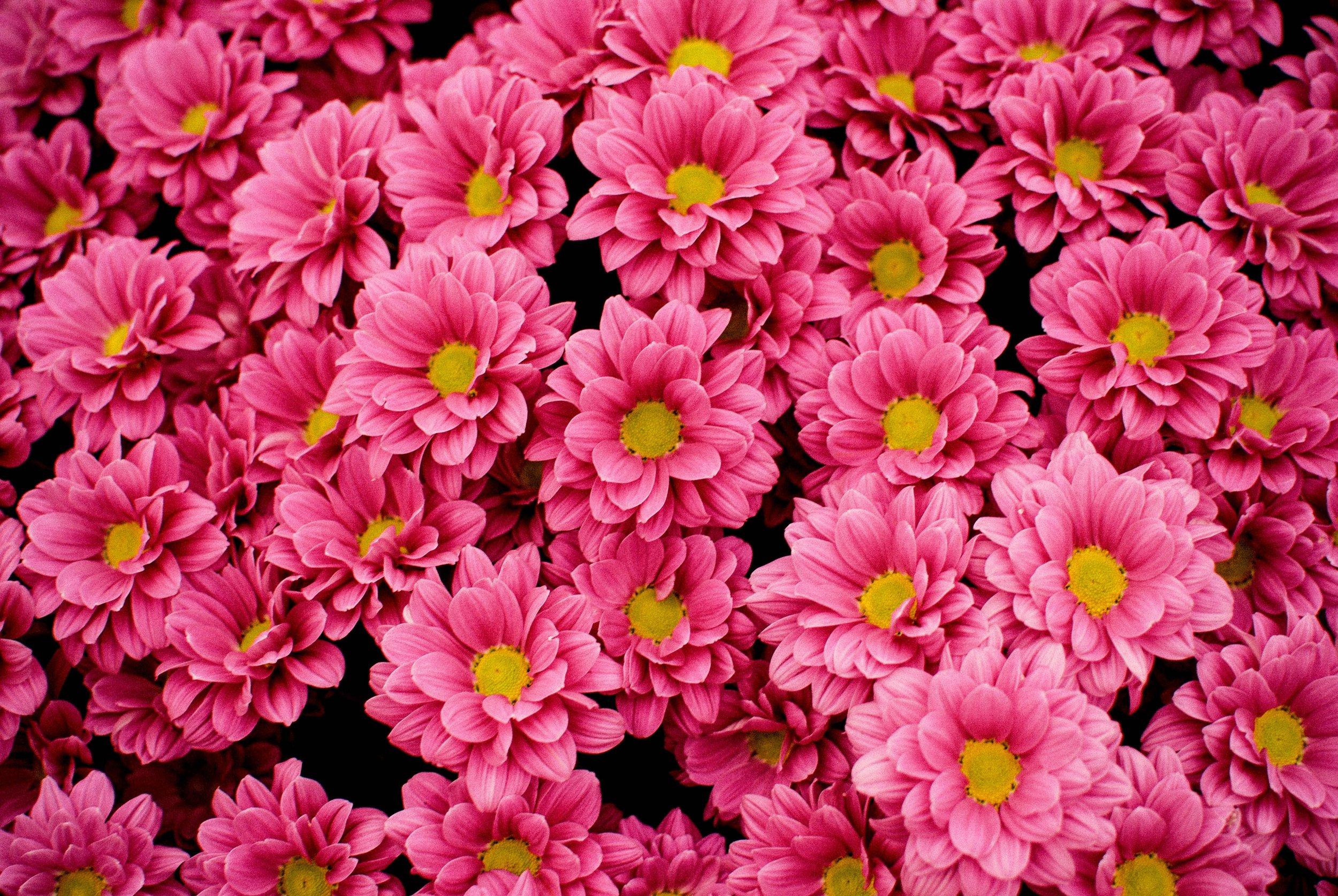 Blossom - $500-$999