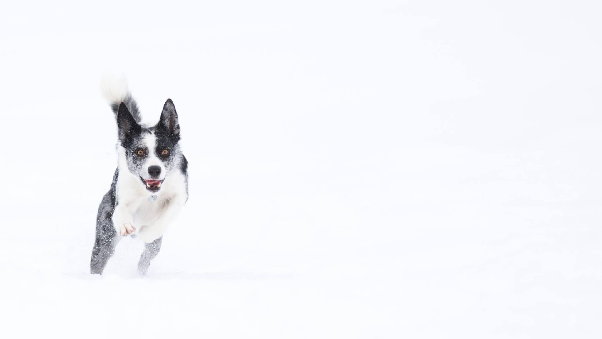 Martok snow.jpg