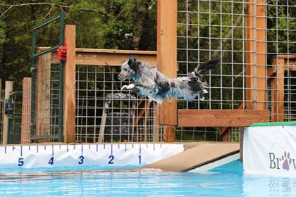max floats over water.jpg