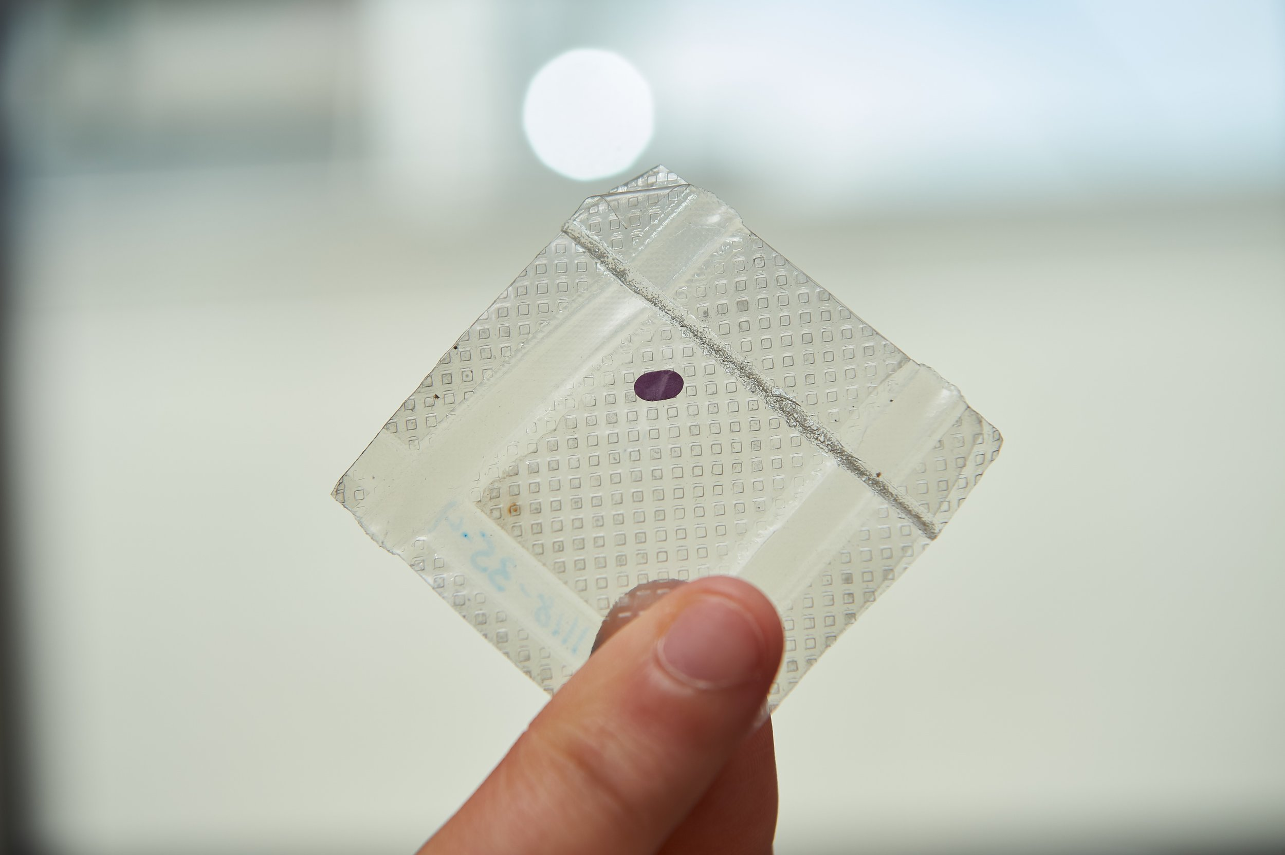 Purple section is the LambdaVision protein-based retinal implant. Credit: Peter Morenus/UConn Photo