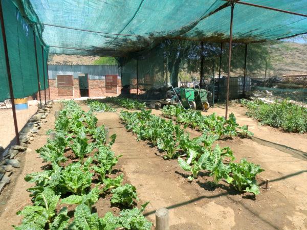 blog 2014 namibia 8.jpg