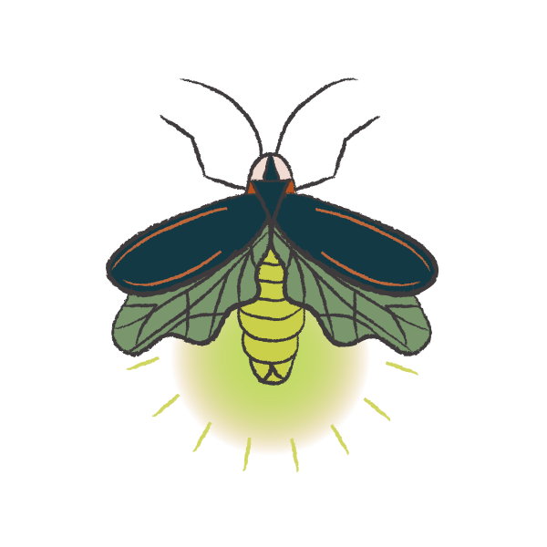 Firefly Scout Color Firefly.png