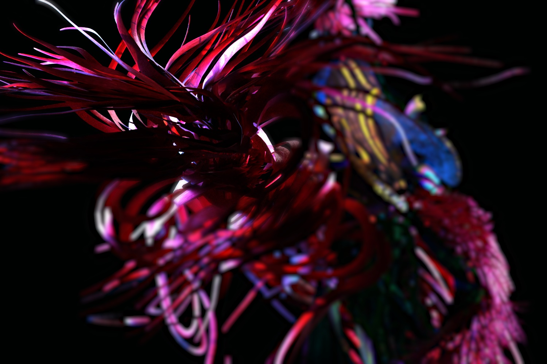 RED-BEARD-ORCHID_CP_04.jpg