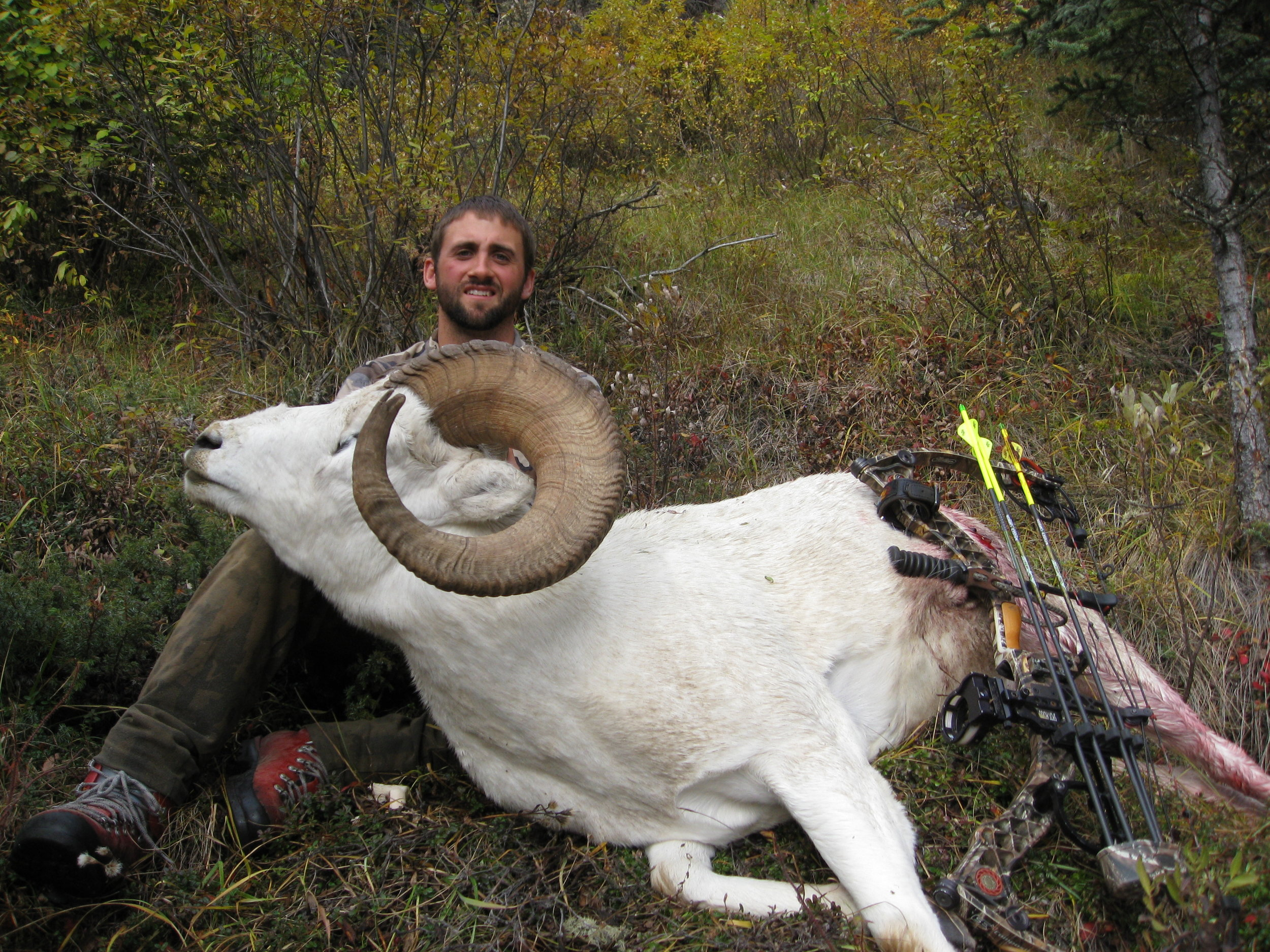 Archery Sheep.JPG