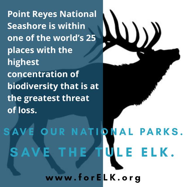 tule elk biodiversity hotspot.jpg