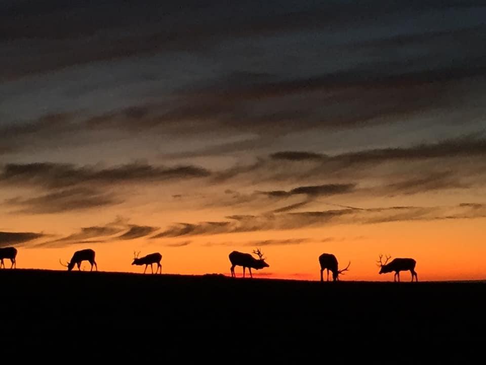 Elk Sunset.JPG