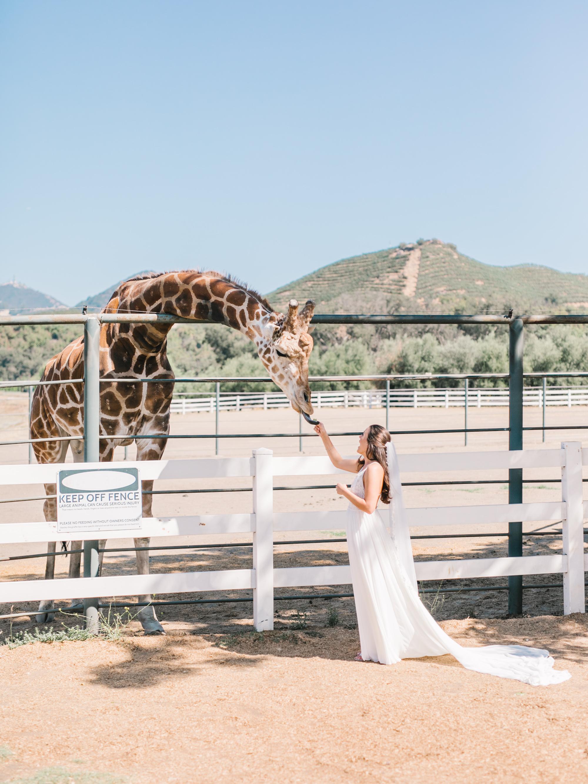 elizabeth-micah-wedding-308.jpg