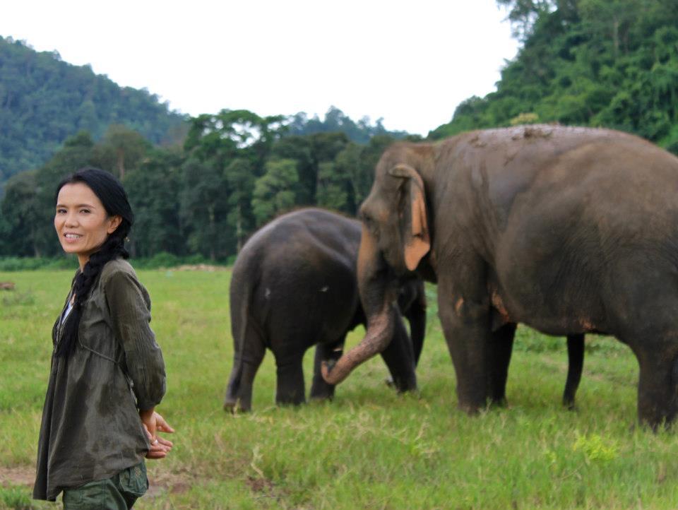 © Elephant Nature Park