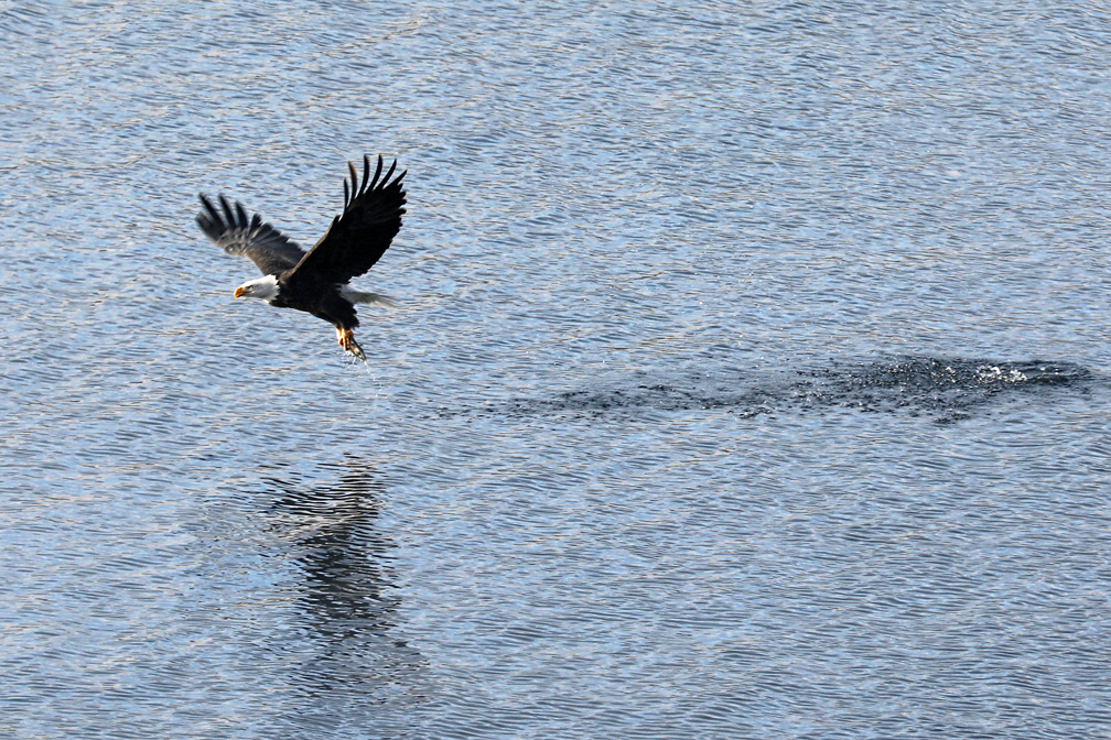 fishing-eagle-cda-2018.jpg