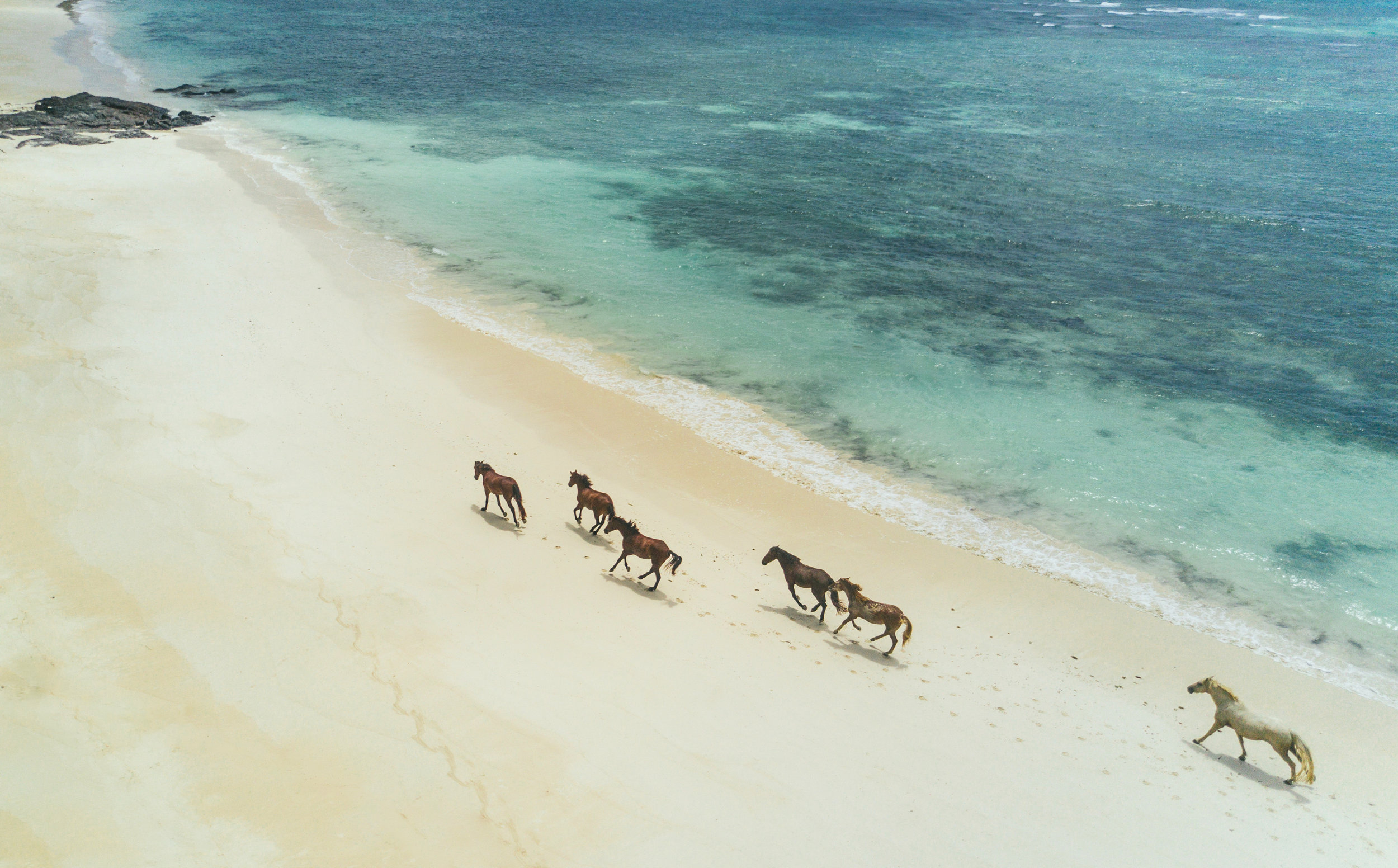 TurtleIsland-horses running on beach-kamacatchme photography.jpg