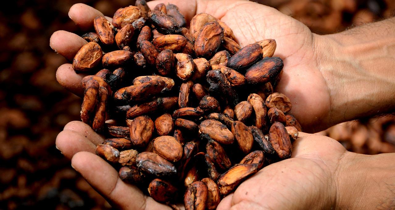 cacao-hands.jpg