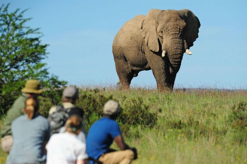 Escape On Safari In South Africa - LOTL