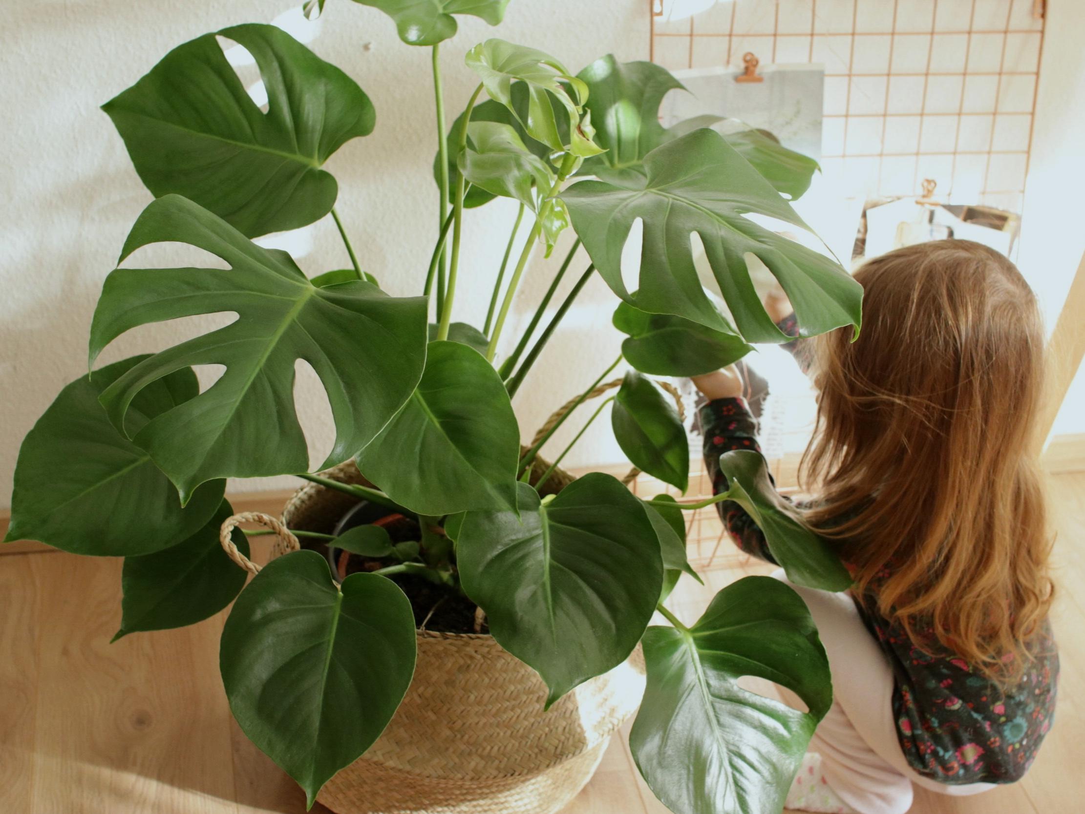 mia+plant.jpg