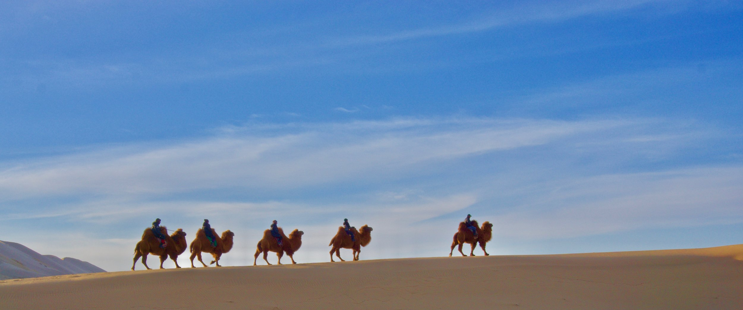 Torarin og familien rider kameler mens de leter etter en kameltrener i Mongolia